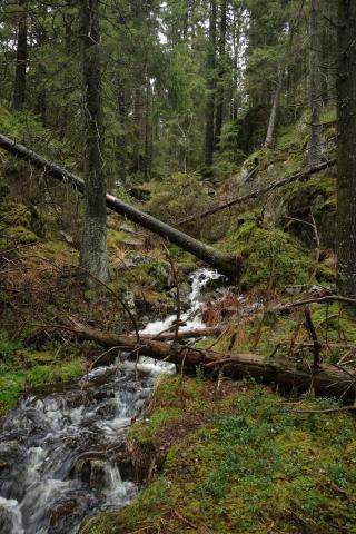 Oblast Ostmarka, kde by měl vzniknout nový národní park. Hlavním nositelem myšlenky nového národního parku je sdružení Ostmarkas Venner